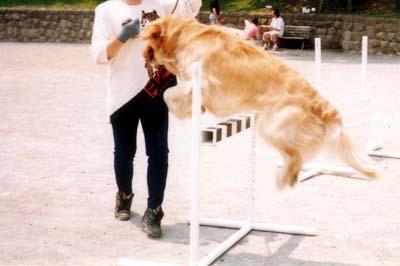 hurdle-3.jpg