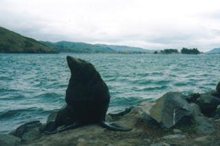 seal-1.jpg