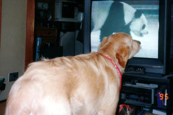 tv-study-3.jpg